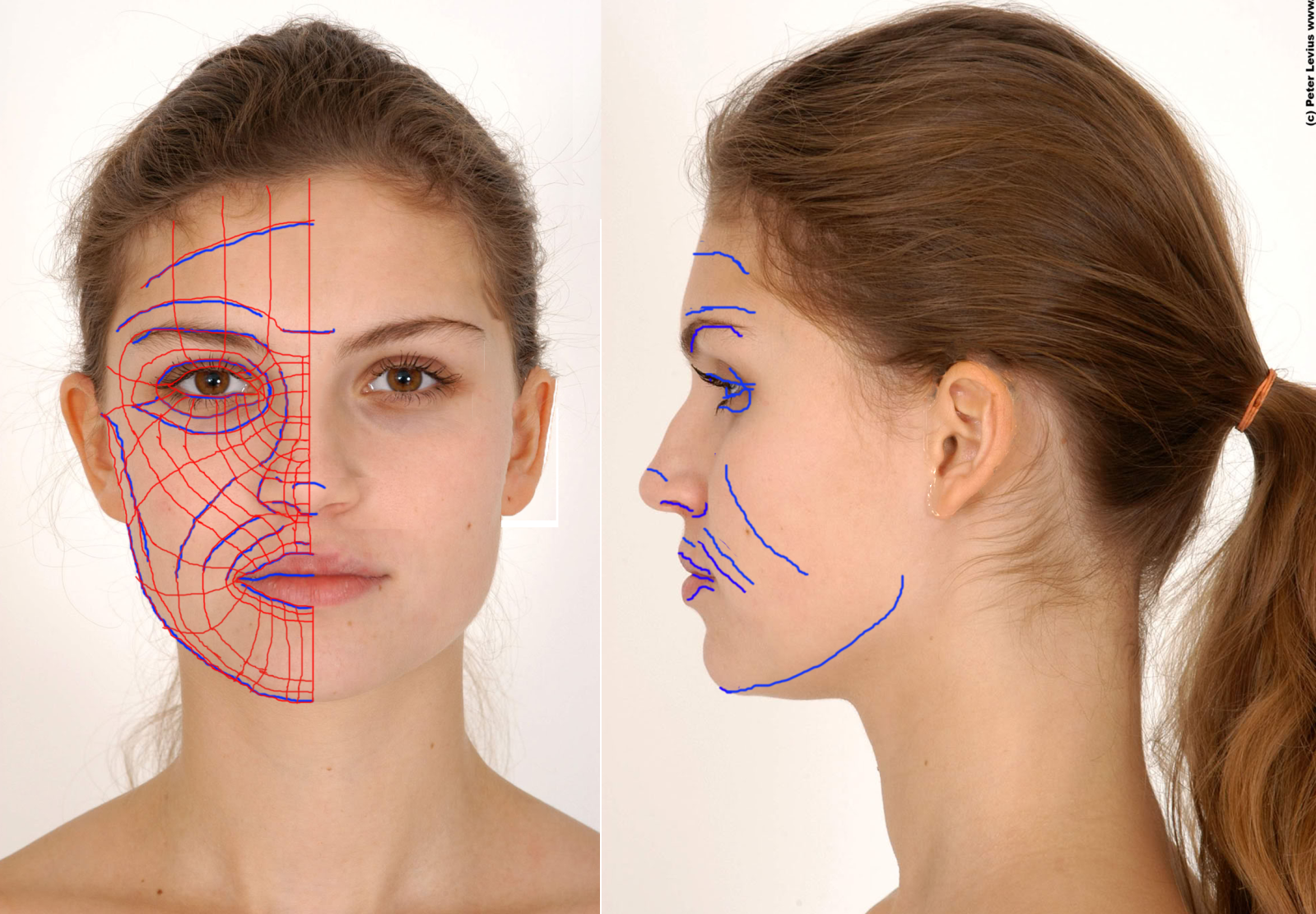 female face front and side view google search face topology
