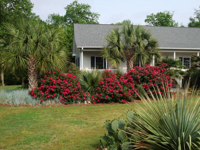 Landscape Design with Knockout Roses | landscaping ideas knockout ...
