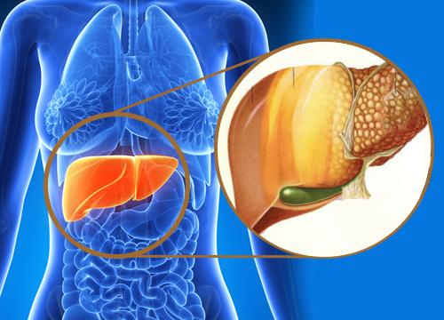 9 Anzeichen für Schadstoffe in der Leber | Gesundheit | Pinterest ...