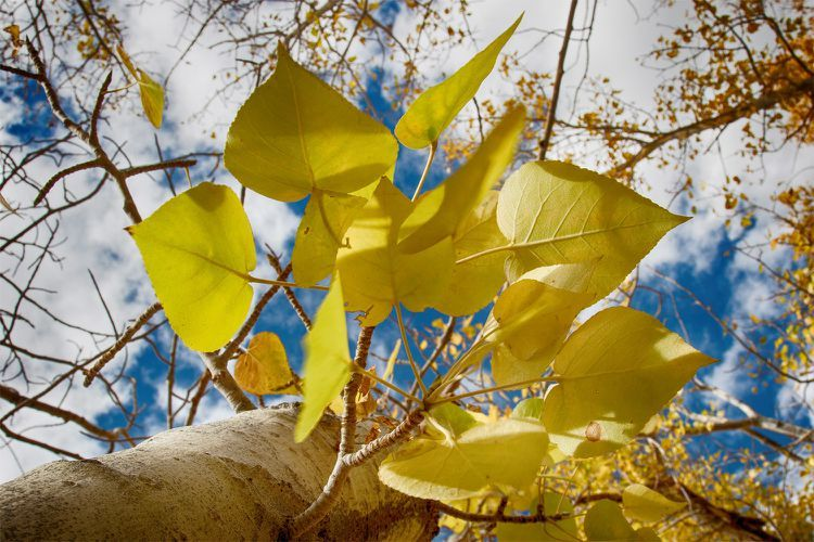California In October Weather And Event Guide October Events Explore California October Weather