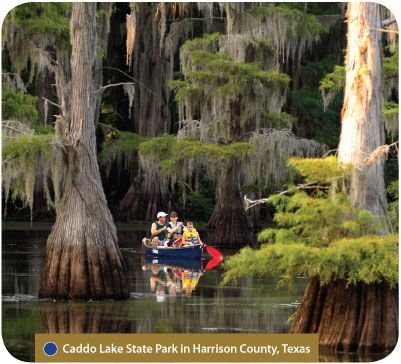 Canoeing In Caddo Lake State Park In Harrison County