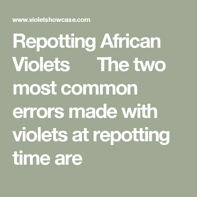 Repotting African Violets The Two Most Common Errors Made