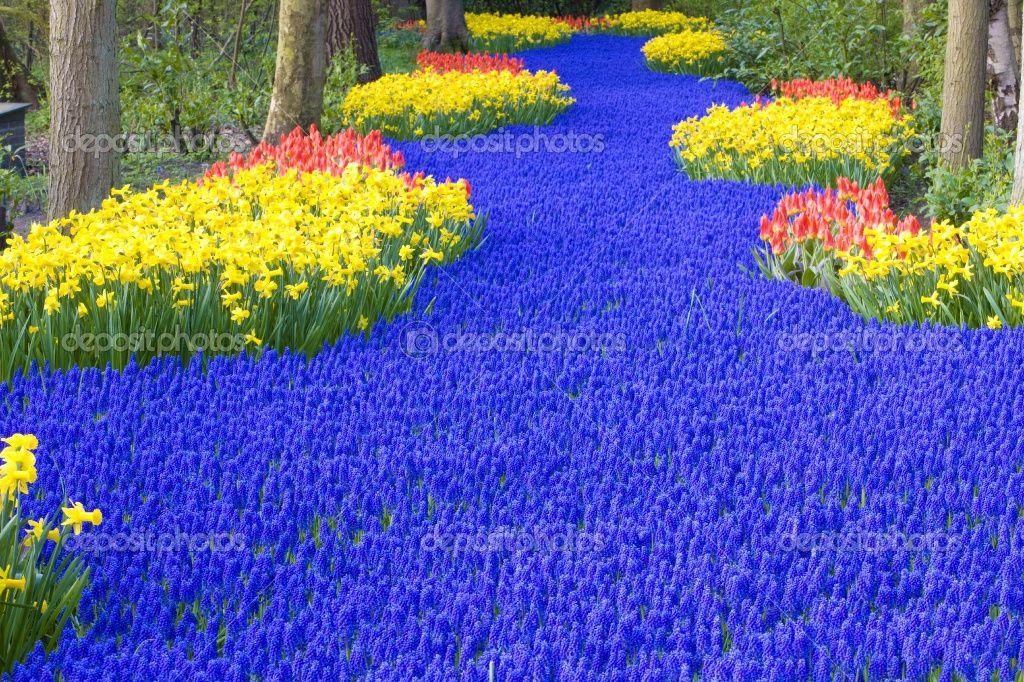 Keukenhof Gardens   Foto stock