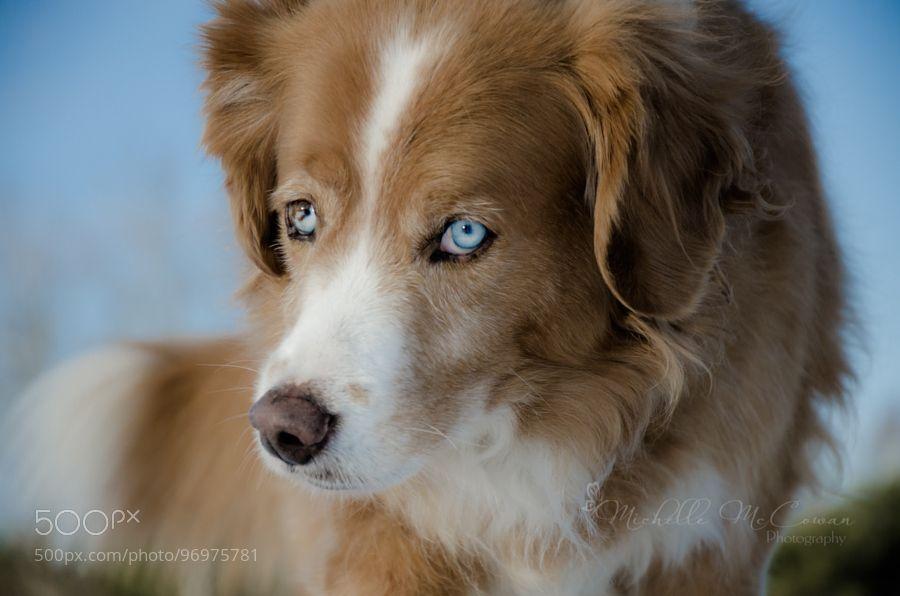 Rusty by michellemccowan