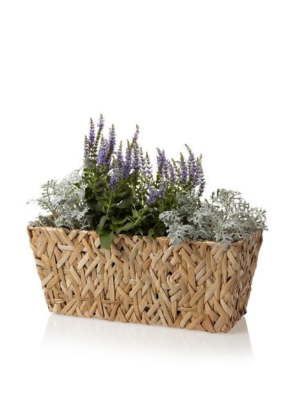 Wald Imports Small Rectangular Random Weave Seagrass Planter, http://www.myhabit.com/redirect/ref=qd_sw_dp_pi_li?url=http%3A%2F%2Fwww.myhabit.com%2F%3F%23page%3Dd%26dept%3Dhome%26sale%3DA24FREWQSX14G9%26asin%3DB00812FO8C%26cAsin%3DB00812FOW8