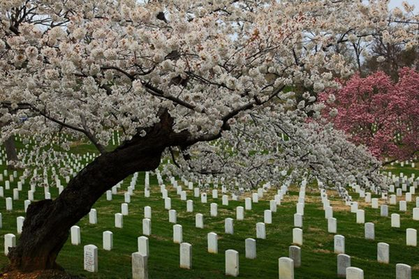 Arlington Cemetary - ill see this, this year.. either in april when i go to md or late in the year