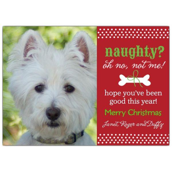 Pet Photo Christmas Cards | Stuff To Buy | Pinterest | Christmas .