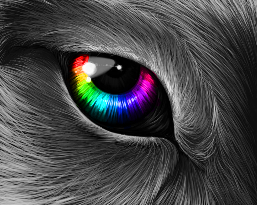 Boyeah Baby Rainbow Wolf Eye Wolf Pack Pinterest Wolf Eyes