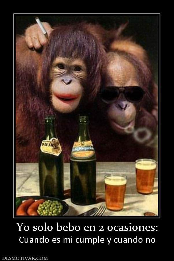 Yo Solo Bebo En 2 Ocasiones Cuando Es Mi Cumple Y Cuando No Funny Monkey Pictures Monkeys Funny Monkey Pictures