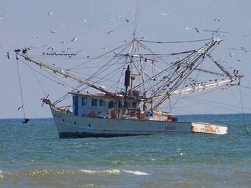 Shrimp Boats And Fresh Gulf Shrimp Galveston Ocean Springs