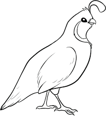 Image Result For Blank Pictures Of Quail For Colouring Images Bird Coloring Pages Detailed Coloring Pages Coloring Pages