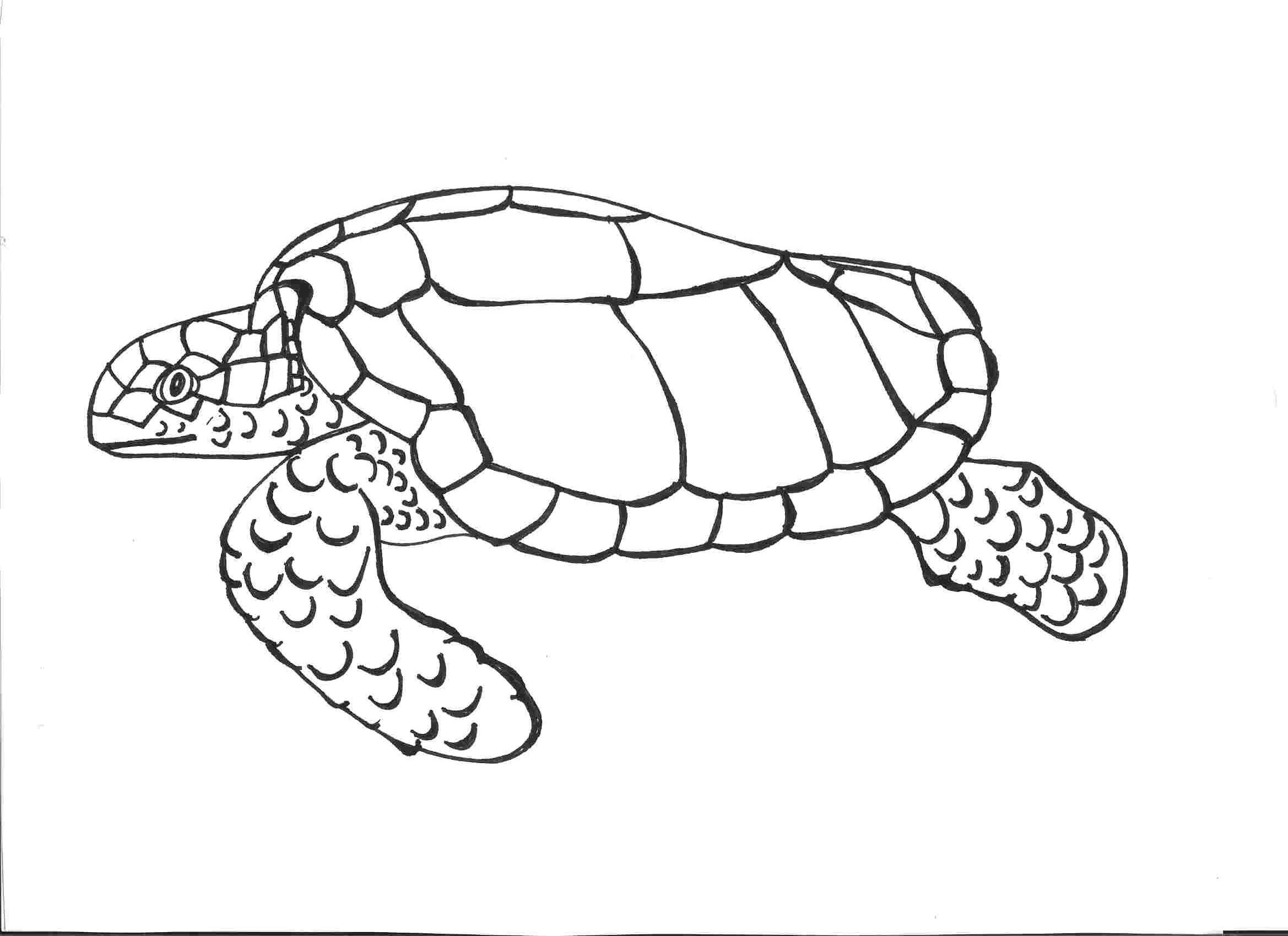Simple Turtle Coloring Pages Ideas For Kids Turtle