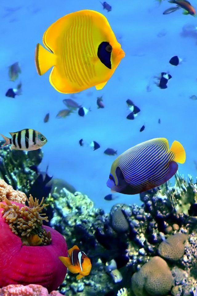 Seabed Fish Iphone 4s Wallpapers Aquarium Live Wallpaper Fish Background Fish Wallpaper