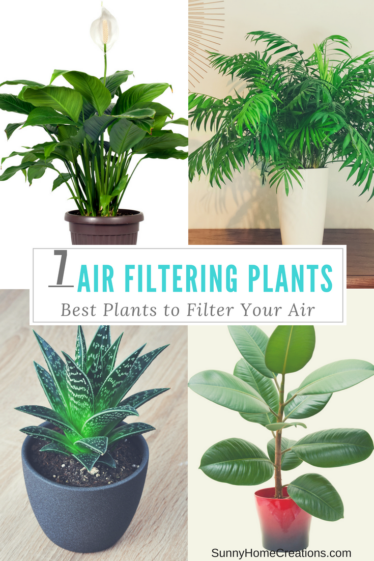 Best Air Filtering Plants To Clean Your