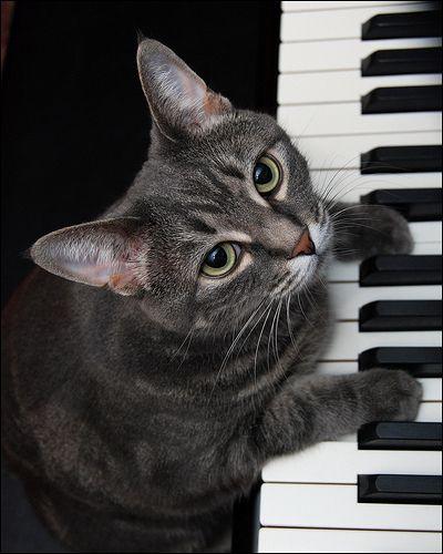 Nora The Piano Cat™ © Burnell Yow!