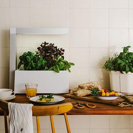 Indoor Garten herbie indoor garten weiß alt image three interieur