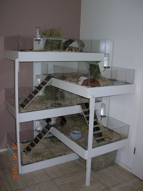 Proud Of Your Hamsters Cage Hamster Hamsterhaus Hamster Ideen