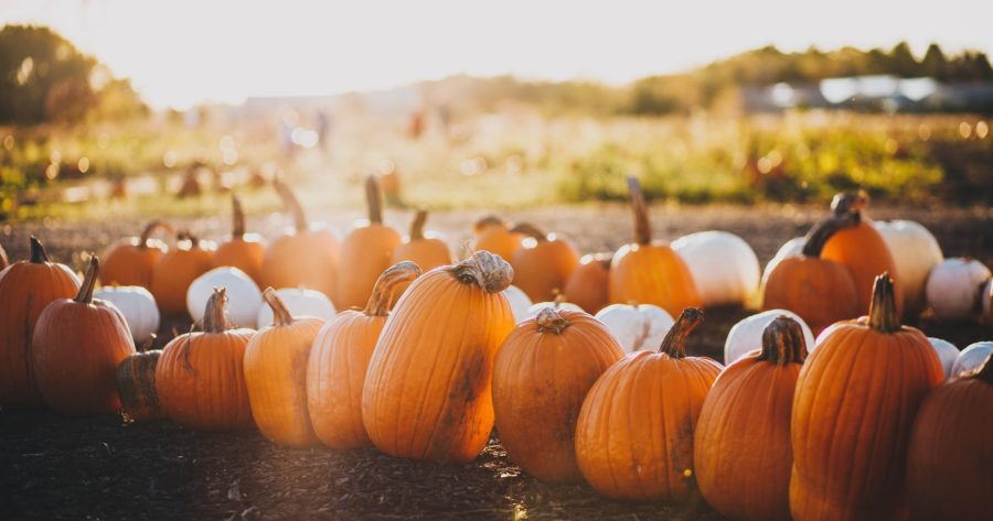9 Best Northern Michigan Pumpkin Patches for a Fall Family