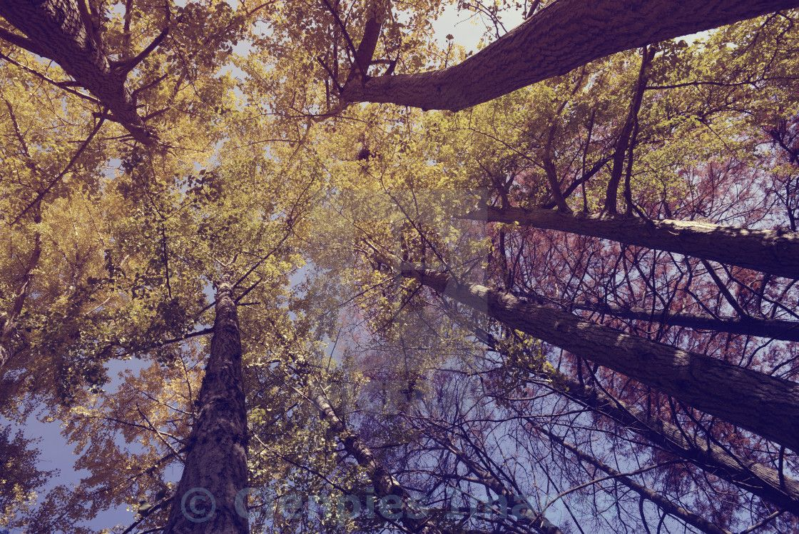 Trees From Low Angle On Picfair Tree Nature Photography Sky