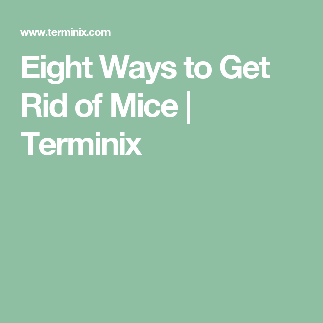 Is Terminix Good For Mice