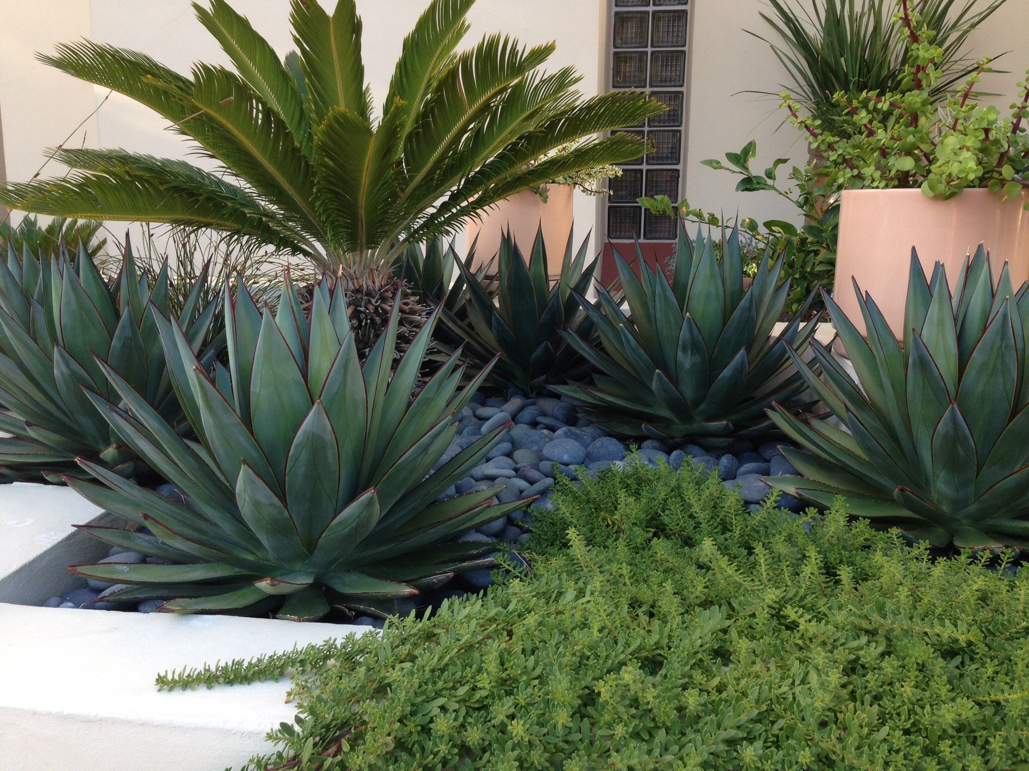 Modern Planter Blue Glow Agave