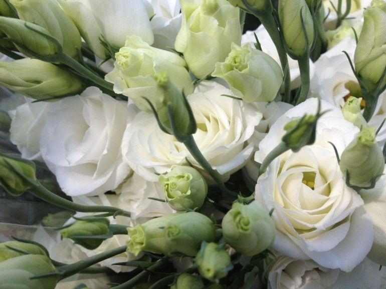 lisianthus blanc « : Selfflowers