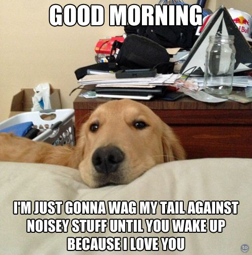 Good Morning From Golden Retriever I Love Dogs Dog Love Dogs