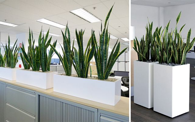 Decoracion con plantas de interiores buscar con google for Decoracion con plantas crasas