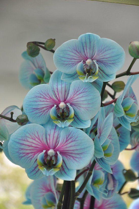Aprenda como fazer sua orquídea ter flores o ano inteiro.