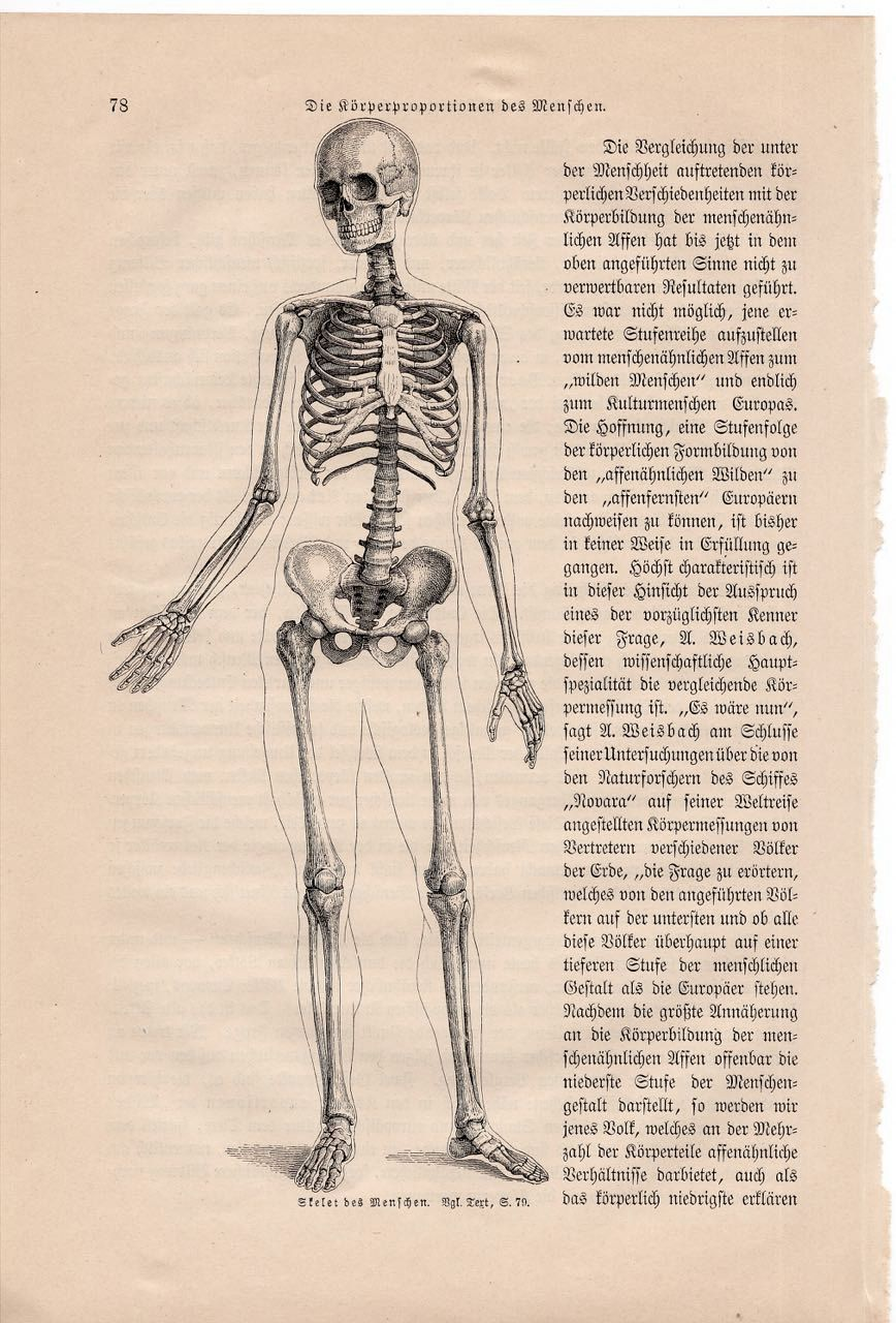 1894 Skeleton Print Original Antique Ancient Culture Lithograph