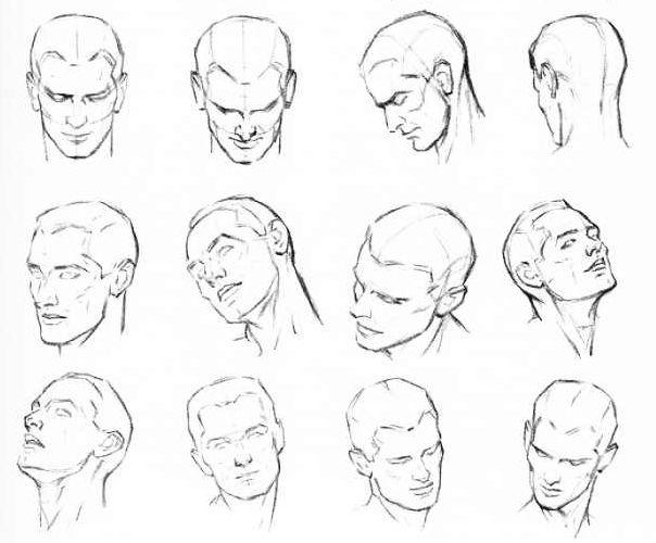 Head anatomy drawing