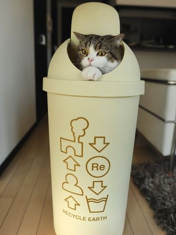 cute cat maru in trash can