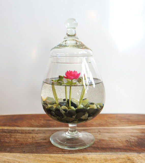 Miniature magenta pink lotus water lily terrarium in glass for Mini fausse plante