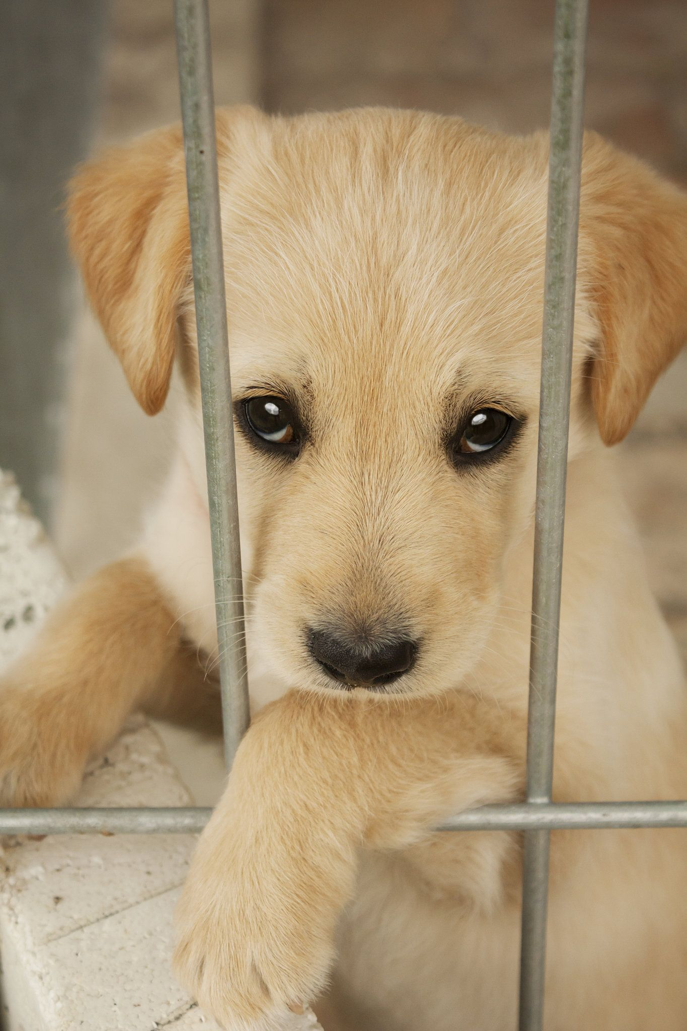 Give A Shelter Pet A Home Pets Animals Puppy Adoption