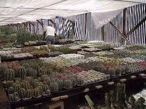 Bach S Cactus Nursery Is One Of The Best Tucson Nurseries They Are Located North City A Little Over 1 Miles Ina Road