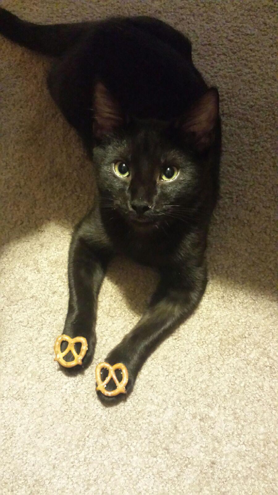 Goldfish? Would you like a pretzel instead? Black cat