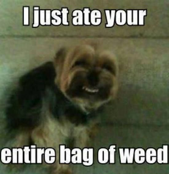 The Dog Breeds Bible Funny Meme Pictures Funny Animals Funny Cute