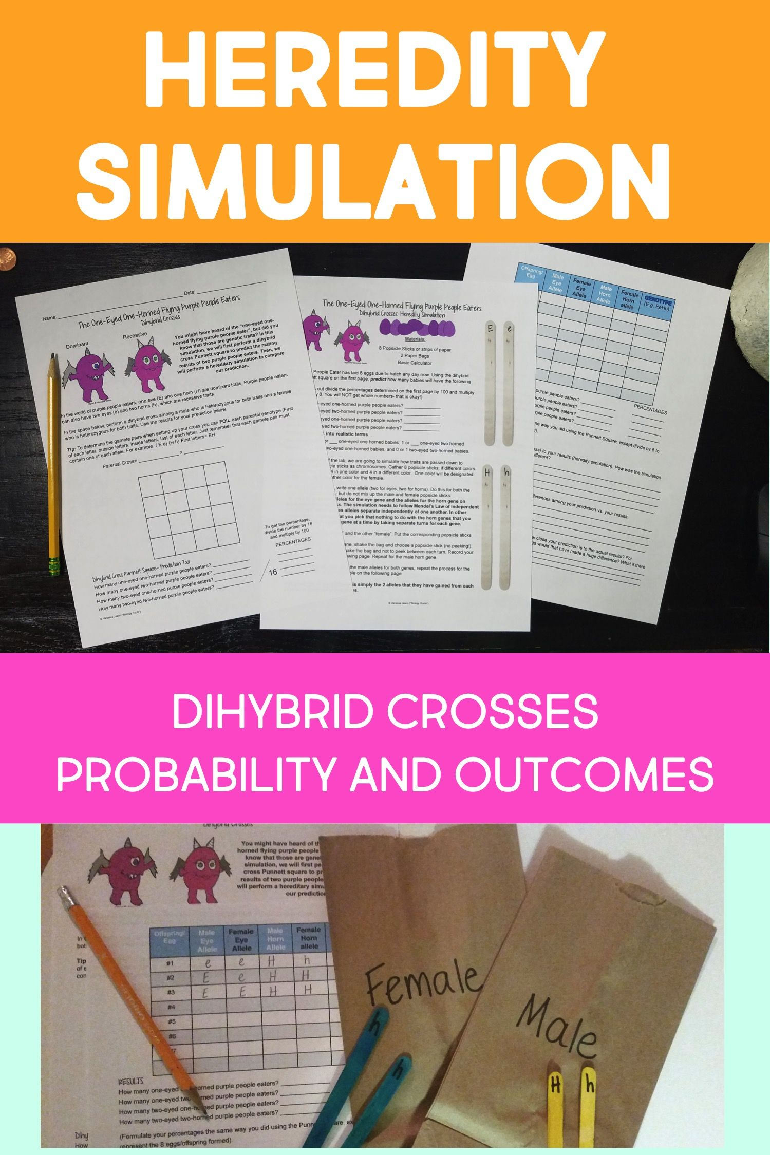 Genetics Dihybrid Cross Activity