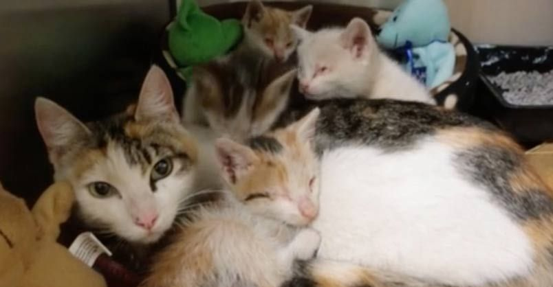 Kittens Reunited With Mom After Rescue From Factory Cats And Kittens Kittens Mama Cat