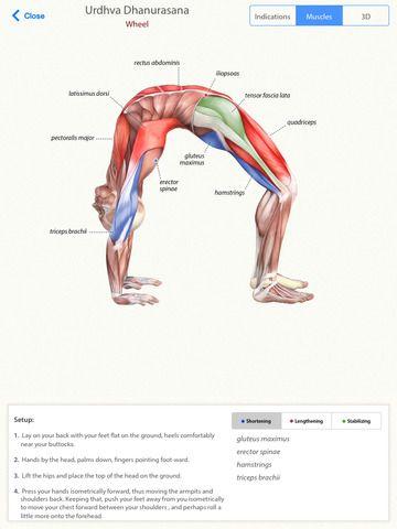 Ipad App 3d Yoga Anatomy Health Daily Gone Free Ipad Apps