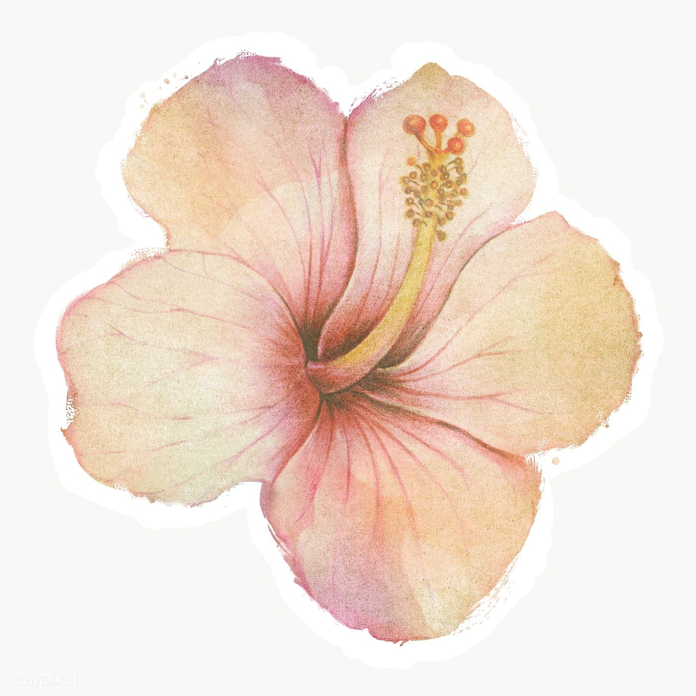 Hand Drawn Beige Hibiscus Flower Watercolor Style Sticker With White Border Free Image By Ra In 2020 Watercolor Flowers Watercolor Flower Background Hibiscus Flowers