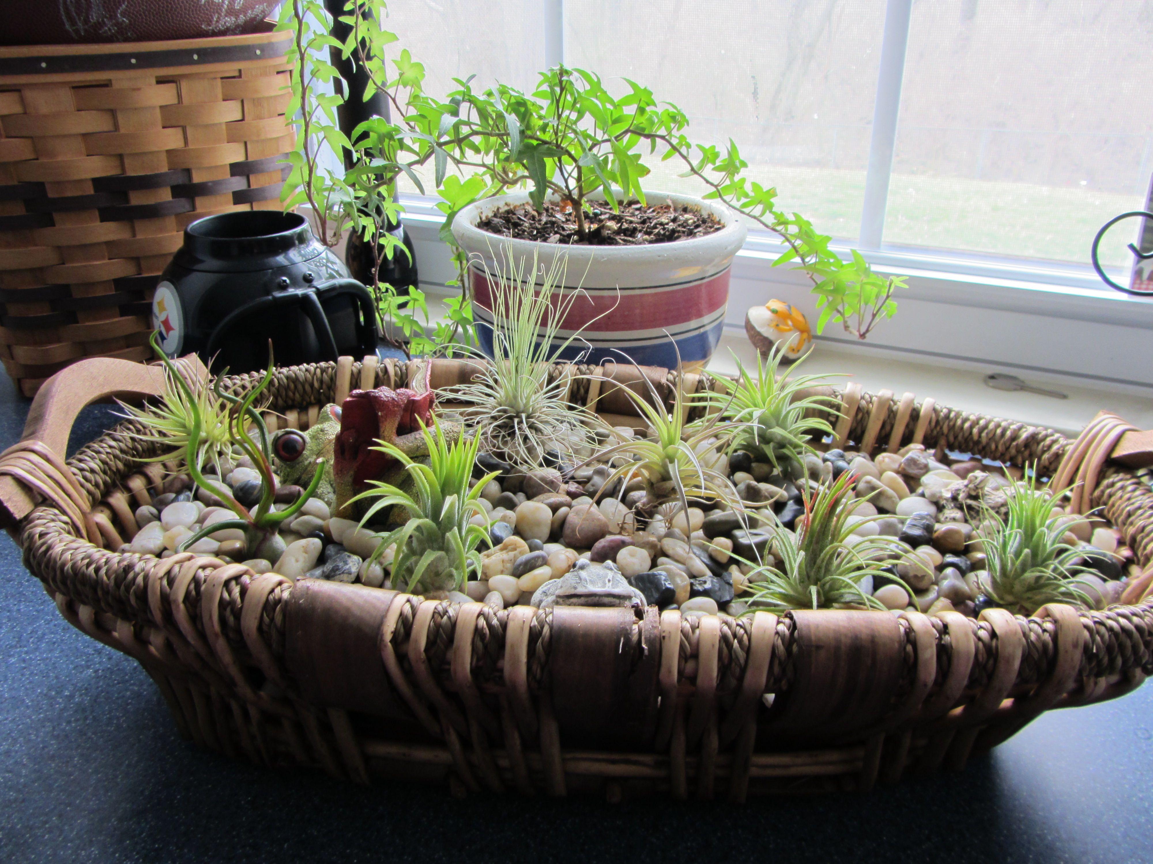 Wicker basket + air plants + river rocks + frogs #2
