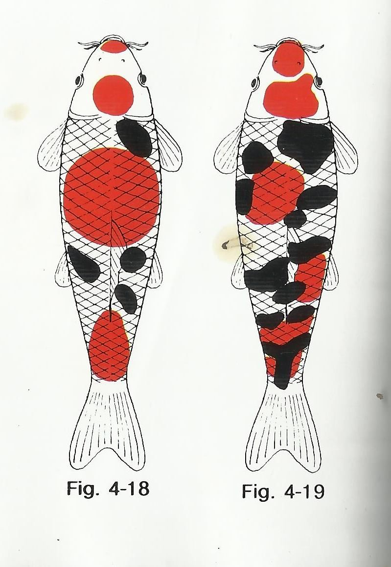 sanke koi pattern diagram photos koi fish pond fish ponds fish breeding goldfish [ 799 x 1156 Pixel ]