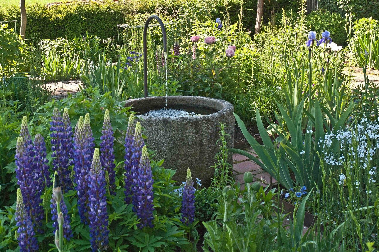 I Love The Garden Lupins Wasser Im Garten Garten Garten Design