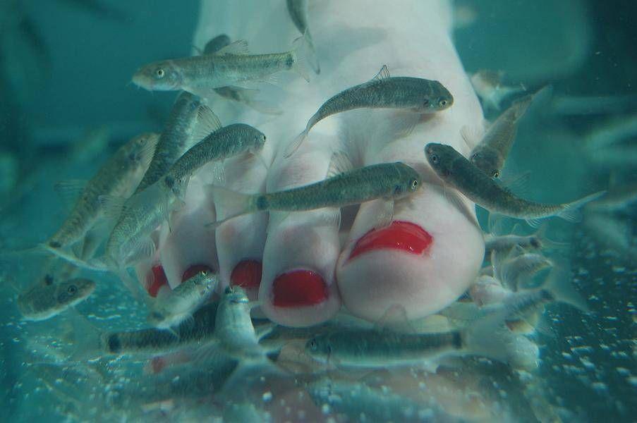 doctor fish beauty