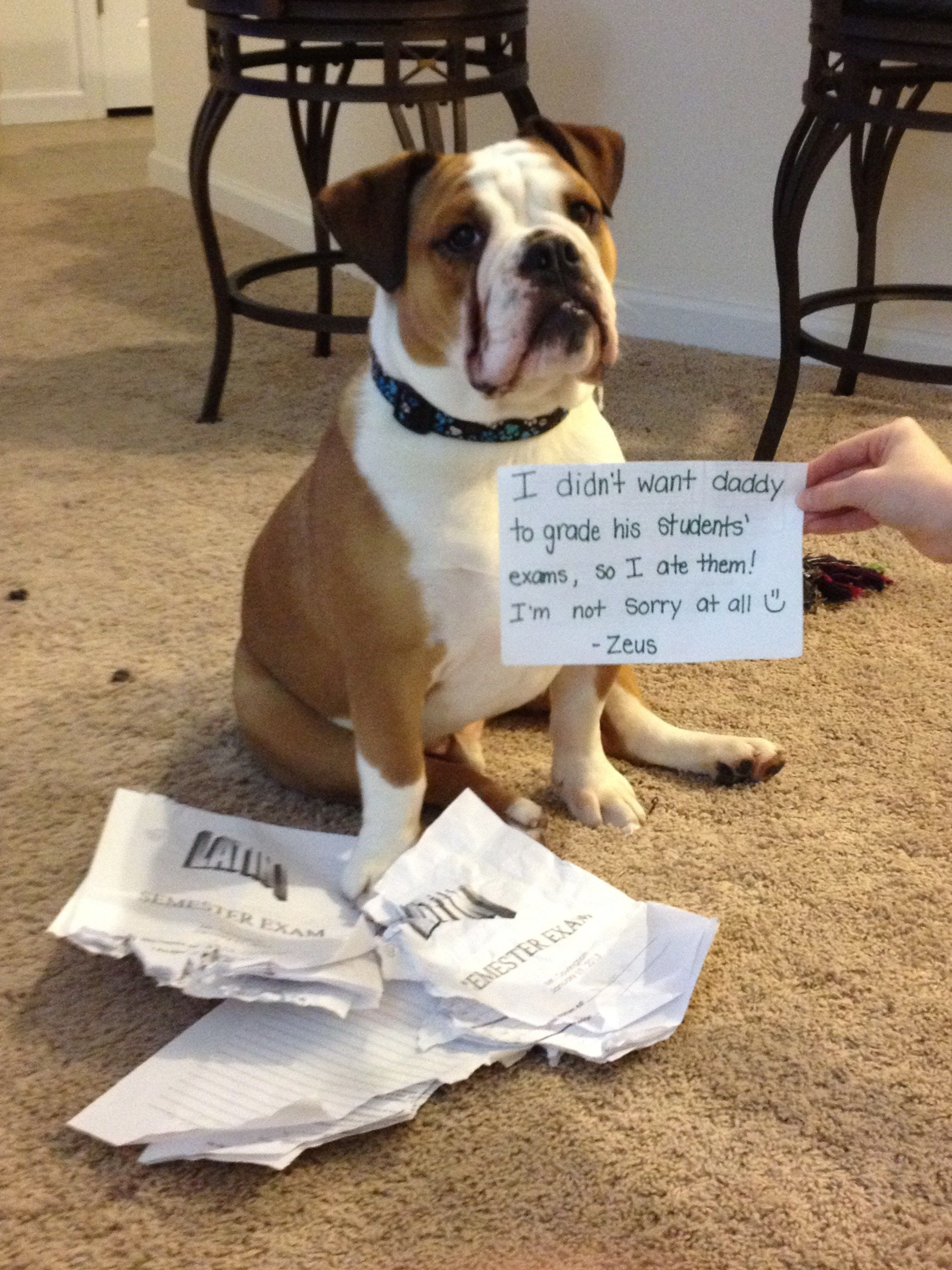 Do dogs eat homework
