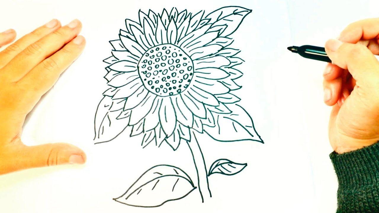 Como Dibujar Un Girasol Paso A Paso Dibujo Facil De Girasol Con