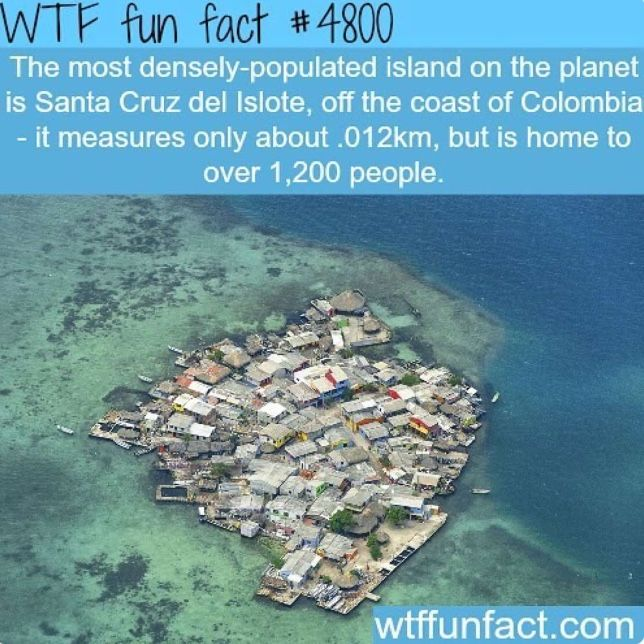 Épinglé par Erika Briot sur Wtf fun fact | Pinterest ...