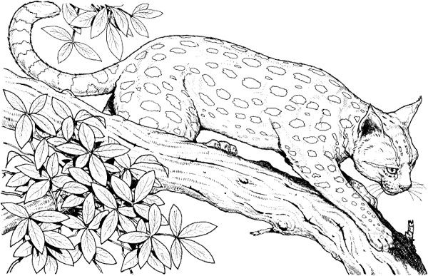 Leopard On A Branch Tree Coloring Page  Tree  Pinterest
