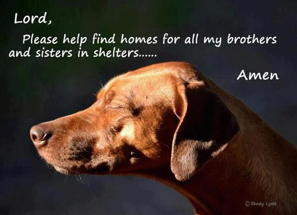 Please visit your local shelter or rescue to find your new BFF :)    <3 <3 <3